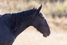 一匹马在秋天的一个牧场地 免版税图库摄影