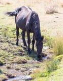 一匹马在秋天的一个牧场地 库存照片