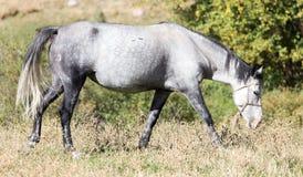一匹马在秋天的一个牧场地 图库摄影