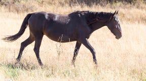 一匹马在秋天的一个牧场地 库存图片