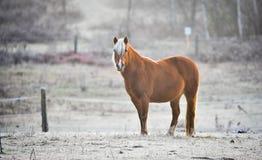 一匹马在他的畜栏在一个冷淡的11月早晨 免版税库存图片