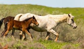 一匹马在绿色草坪的牧场地 免版税图库摄影