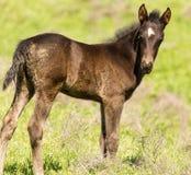 一匹马在绿色草坪的牧场地 图库摄影
