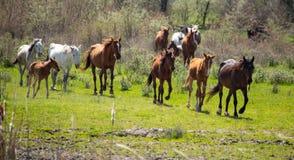 一匹马在绿色草坪的牧场地 免版税库存图片