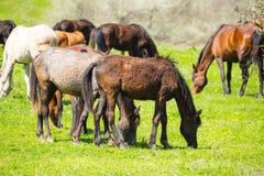一匹马在绿色草坪的牧场地 免版税库存照片