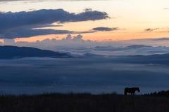 一匹马的剪影在一座山的在黄昏,与雾海我 免版税图库摄影