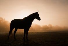 一匹马的剪影在大雾的在日出 库存照片