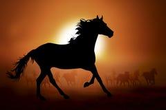 一匹马的剪影在日落的 免版税库存照片
