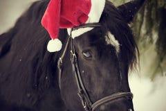 一匹马的枪口在一个红色圣诞老人帽子的 免版税库存图片