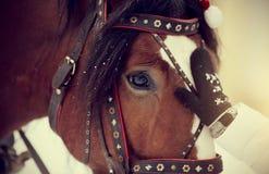 一匹马的枪口在鞔具的 库存照片