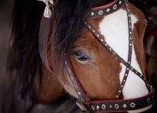 一匹马的枪口在鞔具的 图库摄影