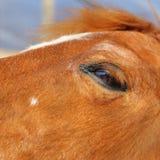 一匹马的枪口的抽象射击与迷离backgruound的 免版税图库摄影
