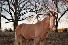 一匹马的画象在日落的 免版税库存照片