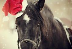 一匹马的画象在的一个红色圣诞老人帽子 库存照片