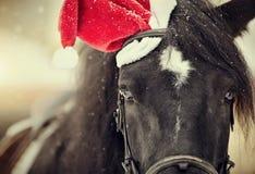 一匹马的画象在的一个红色圣诞老人帽子 免版税库存图片
