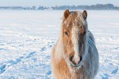 一匹马的纵向在冬天 库存照片
