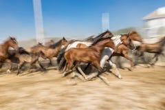一匹马的被弄脏的图象在行动的 免版税库存图片