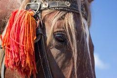 一匹马的详细的画象与栗子头发的 免版税库存照片