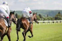 一匹马的边的射击的关闭在驯马竞争时 免版税库存图片