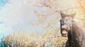 一匹马的画象与微笑的在春天开花自然背景  免版税库存图片
