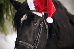 一匹马的画象在一个红色圣诞老人帽子的 库存照片