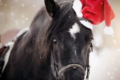 一匹马的画象在的一个红色圣诞老人帽子 免版税图库摄影