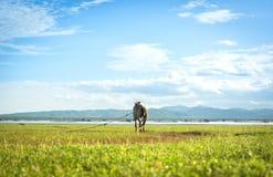 一匹马 免版税图库摄影