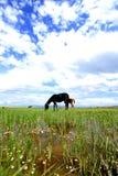 一匹马 免版税库存照片