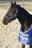 一匹驯马的头反对电畜栏市分的冬天 免版税库存照片