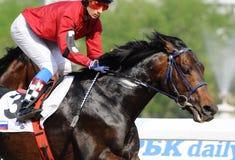 一匹骑师和赛马的画象在行动 免版税图库摄影