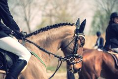 一匹骑马马的画象与他的车手的 库存图片