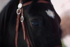 一匹黑马的枪口 免版税库存照片