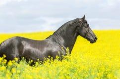 一匹黑白花的马的画象 免版税图库摄影