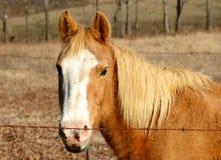一匹褴褛的马在领域吃草 免版税库存照片
