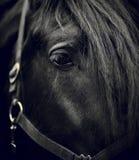 一匹黑马的眼睛 免版税库存照片