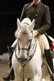 一匹lipzzan马的顶头射击与未知的车手的在行动 免版税图库摄影