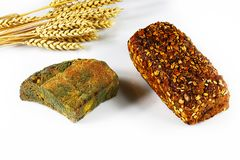 一半发霉的黑麦面包大面包和新鲜的五谷在白色背景隔绝的麦子面包和新芽,不可食的刺的概念 图库摄影