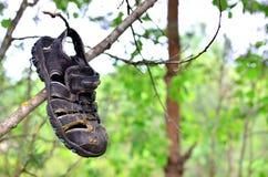 一双老被放弃的童鞋从树暂停在森林 免版税图库摄影