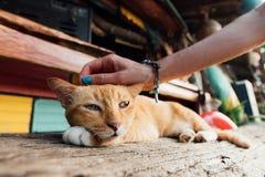 一只一条长凳的红色困猫休息室在海滩附近的一个酒吧 免版税库存图片