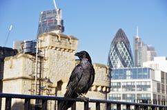 一只乌鸦在伦敦塔堡垒 库存照片