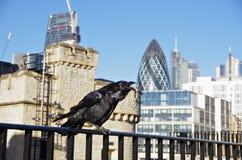 一只乌鸦在伦敦塔堡垒 免版税库存图片