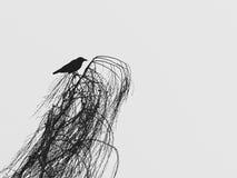 一只乌鸦的剪影在桦树的上面的反对天空的 免版税库存照片