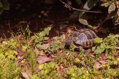 一只乌龟在公园 库存图片
