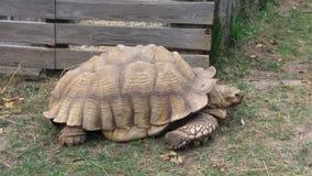 一只乌龟在动物园里 免版税库存照片