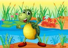 一只乌龟在有两个螃蟹的池塘在后面 免版税库存照片