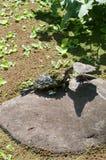 一只乌龟 免版税库存图片