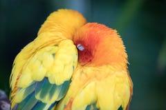 一只五颜六色的热带鸟的特写镜头画象 免版税库存照片