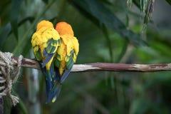 一只五颜六色的热带鸟的特写镜头画象 库存图片