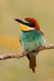一只五颜六色的鸟的画象 库存图片