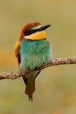 一只五颜六色的鸟的画象 免版税库存图片